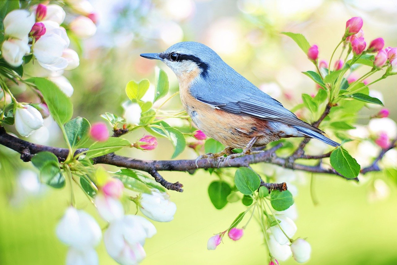 Birds 1623492257