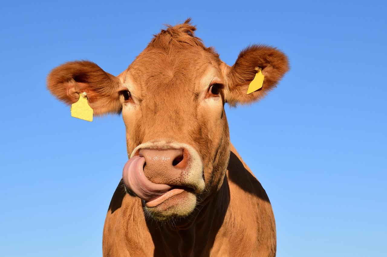 COW 1623491602